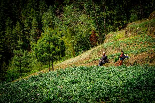 Farmers take a break, Nepal